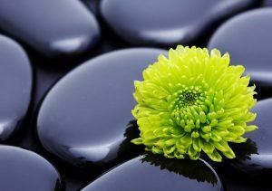 Фото на стекле «Цветок на камнях»