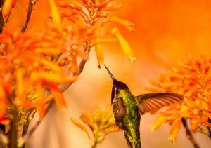 Фото на стекле «Маленькая птица»