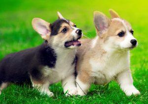 Фото на стекле «Два щенка»