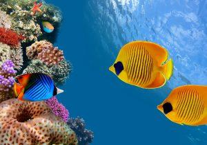 Фото на стекле «Морские рыбки»