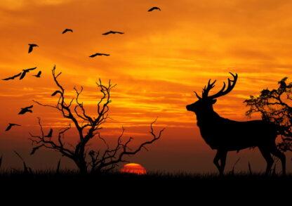 Фото на стекле «Закат Африки»
