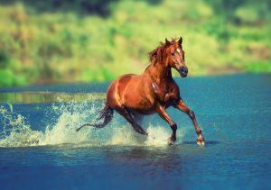 """Фото на стекле """"Бегущая по воде лошадь"""""""
