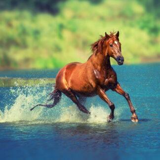 Фото на стекле «Бегущая по воде лошадь»