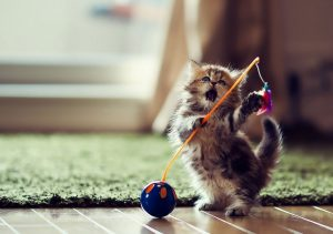 Фото на стекле «Котёнок»