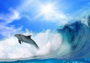 Фото на стекле «Дельфин на волне»