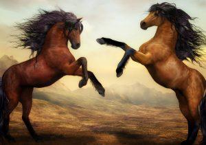 Фото на стекле «Две лошади»