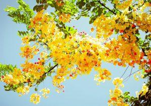 Фото на стекле «Цветущее дерево»
